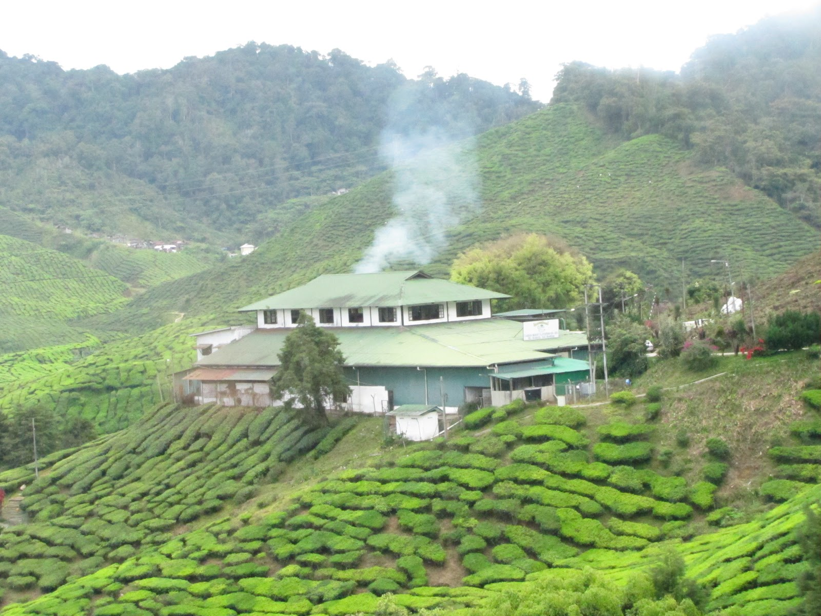 Essay about holiday in cameron highland